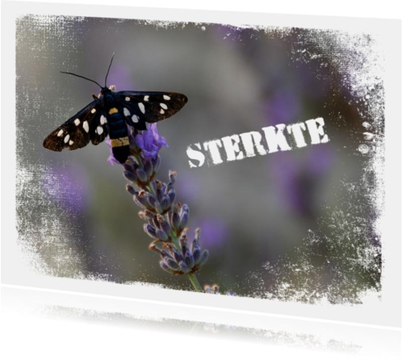 Sterkte kaarten - 14188 Sterkte lavendel
