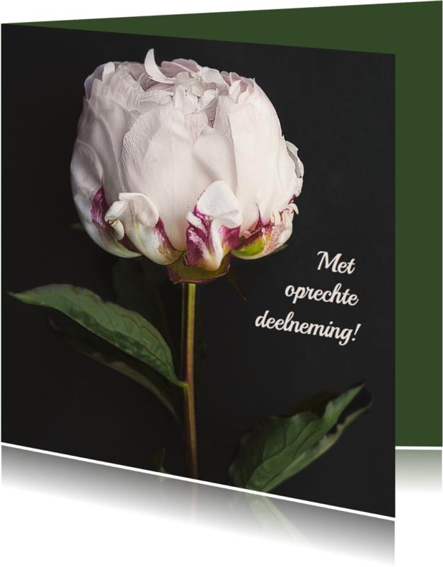 Condoleancekaarten - Condoleancekaart witte roos av