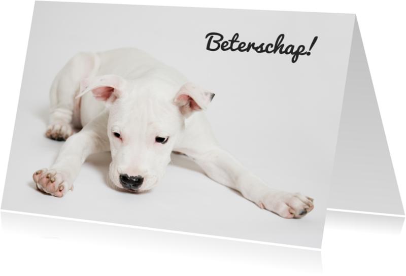 Beterschapskaarten - Gevloerde puppy