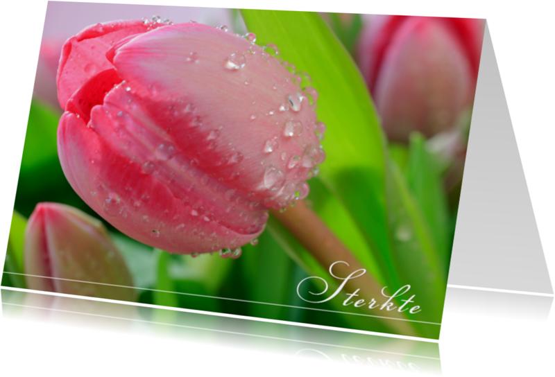 Condoleancekaarten - Roze tulp in bloei