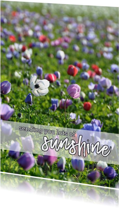 Sterkte kaarten - Sterkte kaart Sunshine
