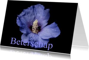 Beterschapskaarten - Beterschap, Hibiscus bloem