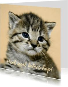 Beterschapskaarten - Beterschapkaart, schattig poesje