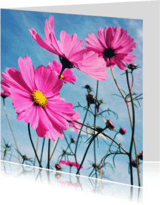 Beterschapskaarten - Beterschapskaart bloemen - LB1