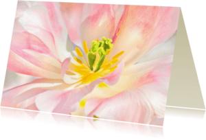 Bloemenkaarten - Bloemenkaart - Tulpen CloseUp