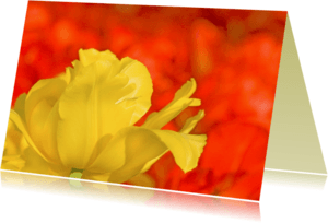 Bloemenkaarten - Bloemenkaart- YellowandRed