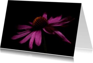 Bloemenkaarten - Bloemkaart,zonnehoed