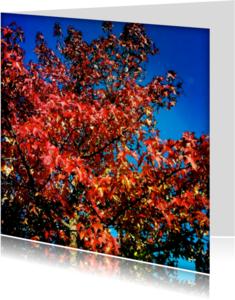 Bloemenkaarten - Boom in herfstkleuren