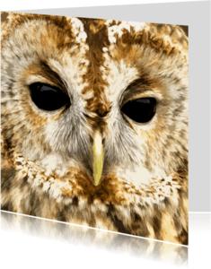 Dierenkaarten - Bosuil close-up