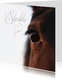 Condoleancekaarten - Close up paardenoog-isf