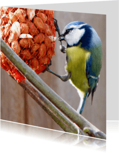 Dierenkaarten - Dierenkaart Koolmeesje
