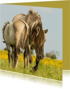 Dierenkaarten - Dierenkaart paarden av
