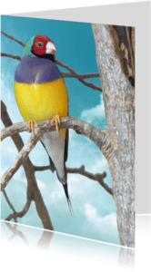 Dierenkaarten - Dierenkaart tropisch vogeltje