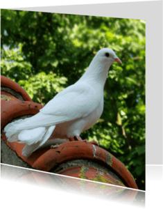 Dierenkaarten - Dierenkaart Witte Sier-duif