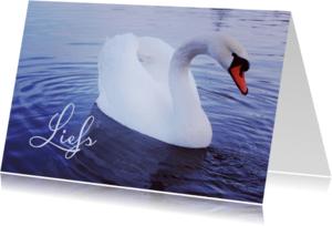 Dierenkaarten - Dierenkaart Zwaan Liefs