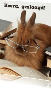 Geslaagd kaarten - Geslaagd konijn