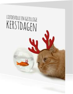 Kerstkaarten - Goudvis en kat-isf