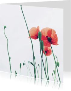 Bloemenkaarten - Kaart met drie klaprozen