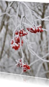 Kerstkaarten - kerstkaart foto bes