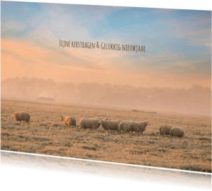 Kerstkaarten - Kerstkaart schapen in de winter