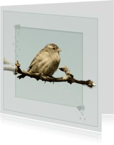 Dierenkaarten - Klein musje