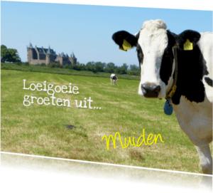 Ansichtkaarten - Koeien-groet uit Holland