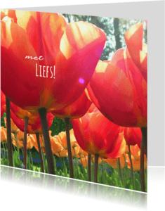 Liefde kaarten - Liefde zonnige rode tulpen