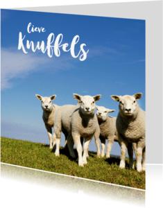Sterkte kaarten - Lieve Knuffels Lammetjes - Lente - OT