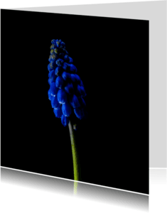 Bloemenkaarten - muscari