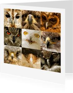 Dierenkaarten - Negen paar roofvogelogen