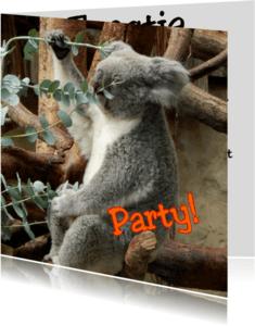 Kinderfeestjes - paty time koala beertje