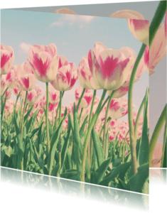 Bloemenkaarten - Rood-witte tulpen