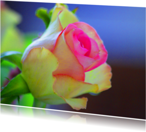 Bloemenkaarten - Roos 4 u