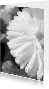 Rouwkaarten - Rouwkaart bedankkaart bloem dauwdruppels - SK