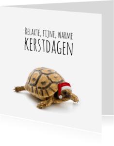 Kerstkaarten - Schildpad met kerstmuts-isf