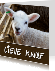 Sterkte kaarten - Sterkte Lieve knuf Lammetje - OT