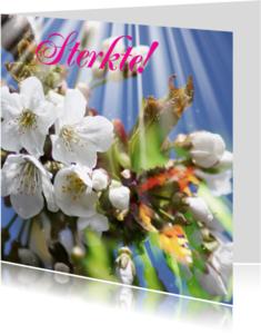 Beterschapskaarten - Sterkte zon bloesem en vlinder