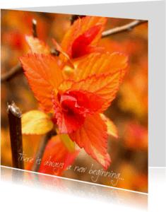 Spreukenkaarten - There is always a new beginning