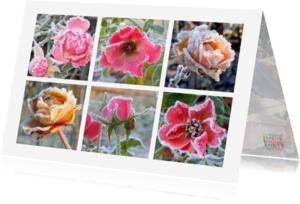 Verjaardagskaarten - Verjaardag winterse rozen IW