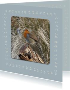 Dierenkaarten - vogelpootjes
