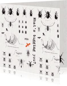 Zomaar kaarten - Zomaar een kaartje 'WHAT'S BUGGING YOU?'