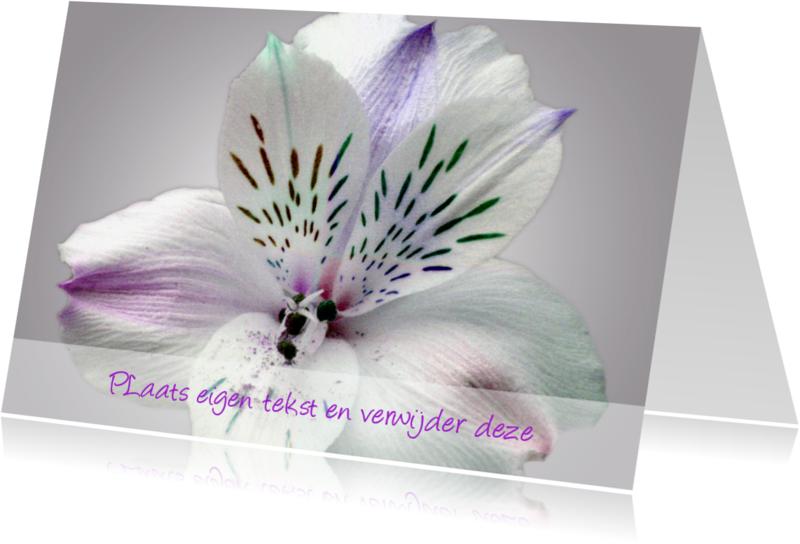 Uitnodigingen - Witte Bloem Blanco